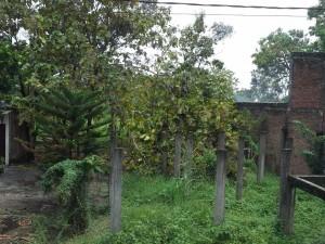 tanah disewakan di driyorejo